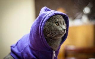 Одежда для кошек своими руками: поиск выкройки и необходимые инструменты