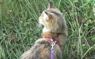 Как научить кота ходить в лоток, если его взяли с улицы